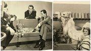 Les animaux sauvages régulièrement invités des plateaux du jardin extraordinaire dans les années 60