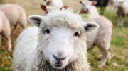 Regardez des documentaires animaliers, c'est bon pour votre santé!