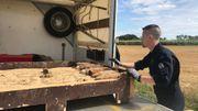 Munitions de la guerre 14-18 transportées pour démantèlement par les démineurs de l'armée