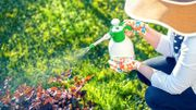 Le Printemps sans pesticides, c'est possible : nos trucs et astuces pour vous aider à relever le challenge !