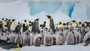 Plongez dans l'univers glacial de l'Antarctique!