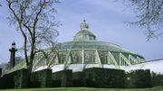 Les serres royales de Laeken ouvrent leurs portes ce vendredi