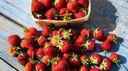 Les bienfaits santé de la fraise, véritable alliée nutrition!
