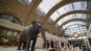 """Au Musée d'Orsay, Les """"origines du monde"""" ou l'art au service de la science au XIXesiècle"""