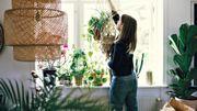 Avoir trop de plantes chez soi peut être une mauvaise idée