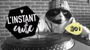 L'instant cute : DJ Kitty, un chat roi des platines