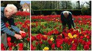 À 88 ans, André De Merlier travaille seul et sans pesticides