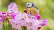 """""""Enquête sur les oiseaux"""", un concours pour toute la famille"""