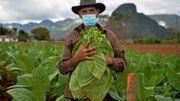 Coronavirus à Cuba: du tourisme aux champs, reconversion forcée faute de visiteurs