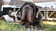 Voici Martha, chien le plus laid du monde...