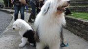 C'est la semaine du chien à Bruxelles!