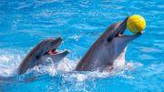 TripAdvisor ne vendra plus de billets pour des spectacles de dauphins et de baleines
