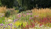 Chez Iris et Jaap au Pays-Bas, un jardin de prairie