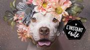 L'instant cute : les pit bulls fleuris de Sophie Gamand