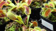 """""""Robots-plantes"""" : des scientifiques cherchent à combiner technologie et nature"""