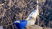 Un écureuil ivre, star du web, et des images devenues virales