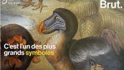 Le dodo, un célèbre oiseau tristement disparu