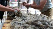 La qualité des produits due à la fibre douce, fine et légère récoltéeest reconnue en Europe