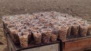 Une bière en échange d'un verre rempli de mégots pour nettoyer les plages !