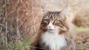 Comment aider son chat à limiter les désagréments de la chute des poils ?