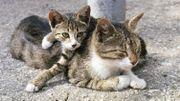 Comment gérer les sorties de son chat? Bénédicte Flament explique les raisons de son absence