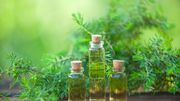 L'huile essentielle d'Arbre à thé… L'élixir miracle pour votre visage