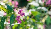 Les Fleurs de Bach pour nous aider à apprivoiser nos émotions et mieux vivre nos petites contrariétés du quotidien