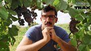 """"""" Punkovino """" : la websérie à ne pas manquer si vous aimez le bon vin et la musique psychédélique!"""