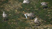 Covid-19 : des scientifiques alertent sur l'impact meurtrier des déchets sur les animaux