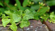 Conseil Adalia: choisir les plantes adaptées à l'emplacement