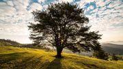 Retrouver l'arbre qui est en soi