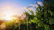 Le meilleur vignoble du monde n'est pas français mais argentin