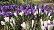 Les communes wallonnes se préparent pour un grand concours fleuri