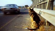 Abandons d'animaux: une caméra cachée piège de nombreux passants