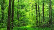 L'intelligence des arbres au Centre culturel d'Engis