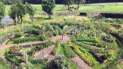 Soigner son potager grâce à la permaculture