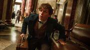 """La suite des """"Animaux fantastiques"""" se déroulera en partie à Paris"""