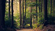 La marche et les promenades dans la nature, puissantes sources d'inspiration pour les compositeurs
