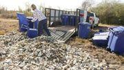 Au Texas, les coquilles d'huîtres sont recyclées en récifs
