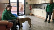 Une seigneurie a été aménagée pour les plus vieux chiens.