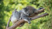 Quels sont les 10 animaux qui dorment le plus?