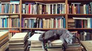 La rentrée littéraire retrouve son rythme de croisière avec 521 romans