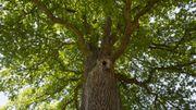 """Laurent Tillon : """"Le mot 'diplomatie' est un mot-clé en forêt et dans la nature en général"""""""