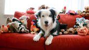 Jouets pour chiens et chats: un secteur de vente qui a le sourire