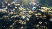 Des coraux pour contrer les cellules cancéreuses?