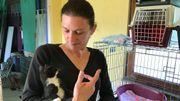 Les arrivées de chatons sont encore peu nombreuses cette année chez Veeweyde