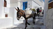 Ella! Sur les traces de l'âne d'Amorgos