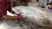 Après le nettoyage, la laine part en France ou eau Luxembourg pour revenir sous forme de grandes nappes