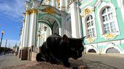 Au Musée de l'Ermitage, des chats tiennent compagnie aux chefs-d'oeuvre