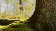"""""""L'intelligence des arbres""""… Toute une vie secrète mise en lumière!"""